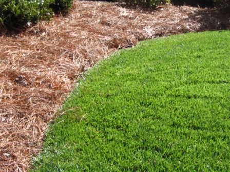 Landscape Edging for Plant Beds in NC | Diana Digs Dirt