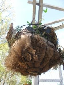 Herbs diana digs dirt for Indoor gardening diana yakeley