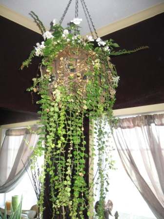 Hanging baskets diana digs dirt for Indoor gardening diana yakeley