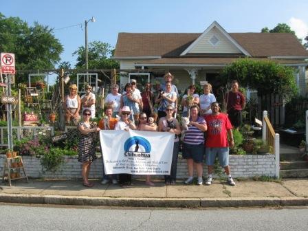 Giving Away Iris Plants In Greensboro For Chihuahuas Diana Digs Dirt